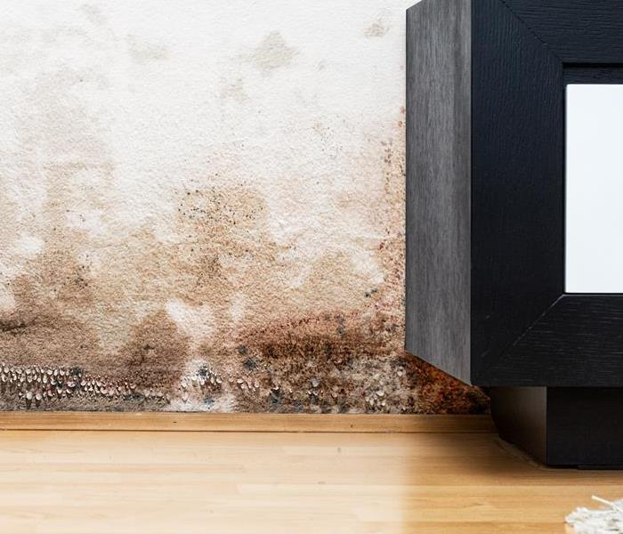 Mold in home