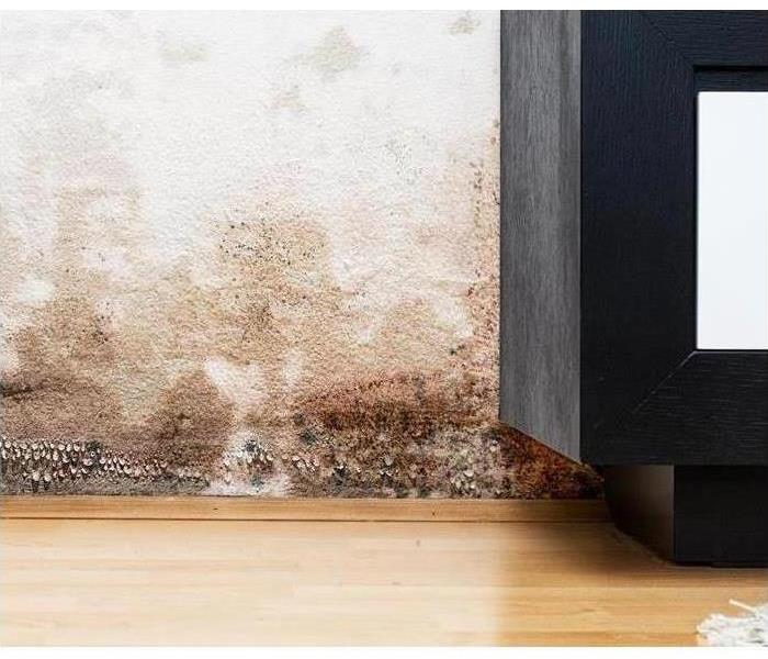Why SERVPRO Top 3 Air Purifiers for Removing Mold Spores From Your Home