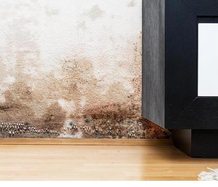 Mold Remediation Top 3 Air Purifiers for Removing Mold Spores From Your Home