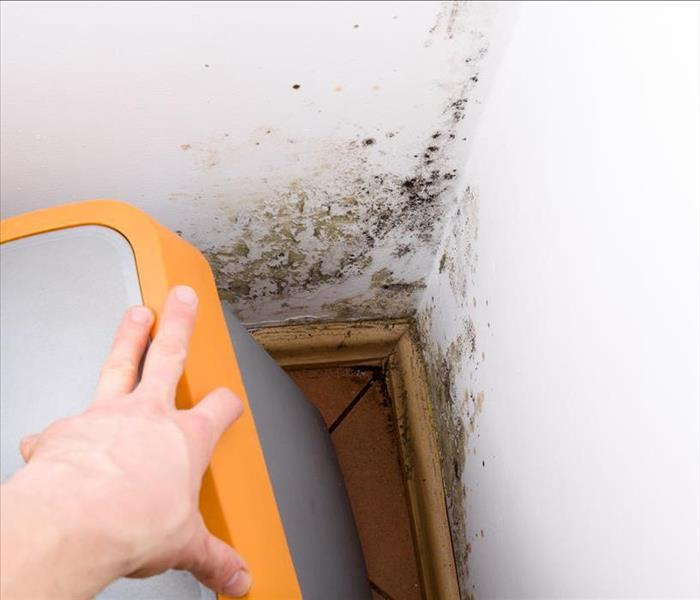 Mold Remediation How To Get Rid Of Black Mold